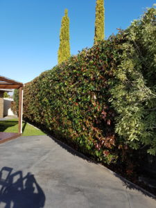 Completed Hedge Job