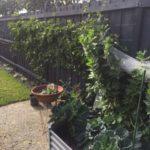 Veggie Passion Fruit