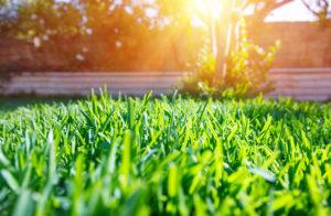 garden services, lawn maintenance